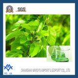 Extracto verde de la licencia de la mora del colorante