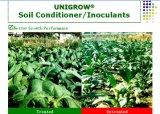 Unigrow organisches Biodüngemittel auf dem Tabak-Pflanzen