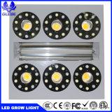 卸し売り完全なスペクトルの強力なHydroponic 1500W穂軸LEDは温室植物のために軽く育つ