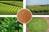 自然な即刻の緑茶の粉100%