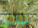 80X100cm, сетки ладони даты вала даты HDPE нити 70X90cm мешок зеленой Mono сетчатый для крышки даты с черными Drawstrings