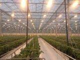 Lampe à haute pression à base de sodium 100W 150W Plant Growing Lamp