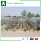 야채 꽃을%s 단 하나 경간 갱도 폴리에틸렌 필름 온실