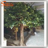 Arbre artificiel à feuilles persistantes en gros de Ficus de banian de la Chine