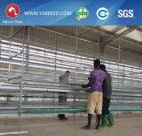 Jaula de batería galvanizada caliente de la capa a la granja grande de Kenia