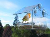 Alimentatore acrilico dell'uccello della finestra della prova dello scoiattolo