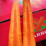 Свежая красная или желтая морковь