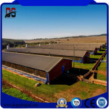 Azienda agricola di bestiame d'acciaio della struttura prefabbricata dell'ampia luce