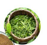 Extracto de té verde de alta calidad catequinas EGCG el 95%