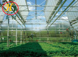 Aluminum Profile Holloe Tempered Glass Greenhouse