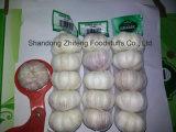 Китайский свежий нормальный белый чеснок с хорошим ценой