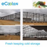 Manter fresco personalizada de armazenamento a frio para processamento de produtos hortícolas