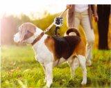 Justierbare Haustier Heround Hundeverdrahtungs-Rückseiten-Brust-Reichweite-Brücke Sheroulder Riemen-Montierungs-Klage mit Vorgangs-Kamera (SHJ-AC05)
