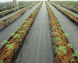 Tecidos de PP de plástico Agricultura Tapete de controle de plantas daninhas de folha de terra Nersury