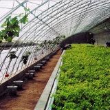 Горячие продажи Китай сельскохозяйственных Multispan зеленый дом для выращивания овощей