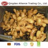Gros gingembre chinois frais de bonne qualité