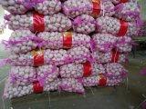 Aglio bianco normale cinese (4.5cm 5.0cm 5.5cm 6.0cm ed aumentano)