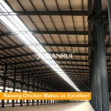 Explotaciones agrícolas famosas de pollo de Morden del diseño de Tianrui de la fábrica de China