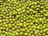 Erste Qualitätsneue Getreide-Grün-weiße Bohne