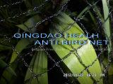 4mx100m Anti-Insekt 40X40mesh Netz