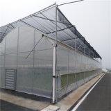 꽃 (PC GH)를 위한 중국 폴리탄산염 장 온실 PC 온실