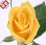 가짜 가정 정원 훈장이 PE 장미 인공적인 결혼식에 의하여 꽃이 핀다