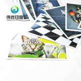 Stampa della cartolina di alta qualità da un gatto dell'animale domestico