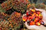 Het Distillaat Pfad van het Vetzuur van de Palm van de Palmolie van Indonesië in Trommel