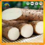 중국 서양 고구마 뿌리 줄기 추출