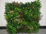 Neuer Entwurfs-künstliche Pflanzenwand-Blumen-Wand-Deckel-Dekoration