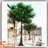 섬유유리 대중음식점 훈장을%s 인공적인 Ficus 나무