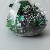 Bevordering Bewaarde Bloemen voor Creatieve Gift