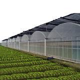 야채를 위한 최신 판매 중국 농업 Multispan 녹색 집