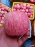 Frais de fournisseur d'or Red Fuji Apple