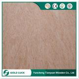 Frente/Espalda Bintangor álamos de embalaje de madera contrachapada de grado