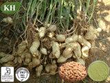 100%自然なピーナツピーナツシェルのエキス: 98%のルテオリン
