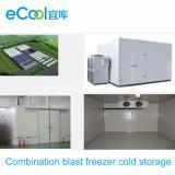 La cámara fría del congelador de ráfaga de la combinación y refrigera el equipo para el alimento congelado