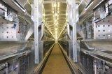 De Kooi van de Kip van de Laag van het Landbouwbedrijf van het gevogelte met Hete Galvanisatie