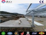 Montagem rápida exploração avícola a construção em aço Galpão de aves de capoeira