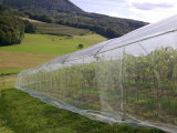 Усильте плетение Анти--Насекомого для того чтобы защитить ваш завод
