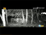 Камера игры звероловства камеры Sg-009 иК Bestguarder 12MP 1080P Scouting с рядом обнаружения до 75FT