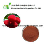 Extracto de Bayberry Vermelho 80% 98% Suplemento de Myricetina para Alimentos