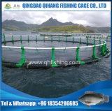 純ケージ、HDPEの管の魚のケージを耕作しているコイ