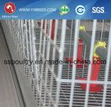 Jaula del pollo tomatero con el equipo automático de las aves de corral para Zimbabwe