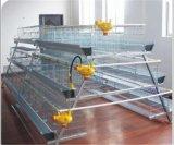 Слой фермы цыпленка горячий продавая арретирует оборудование (рамка)