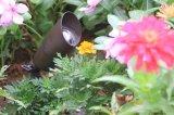 防水真鍮の点はLEDの景色の照明設備の屋外の庭ライトIP65をつける