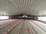 Ce amable granja de pollos con el equipo de diseño para la venta libre