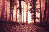 Waldlandschaftshand gedruckte Segeltuch-Drucken-Wand-Künste