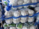 Aglio bianco puro fresco cinese di alta qualità