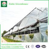 新しいデザイン正方形の透過Foldable庭の温室